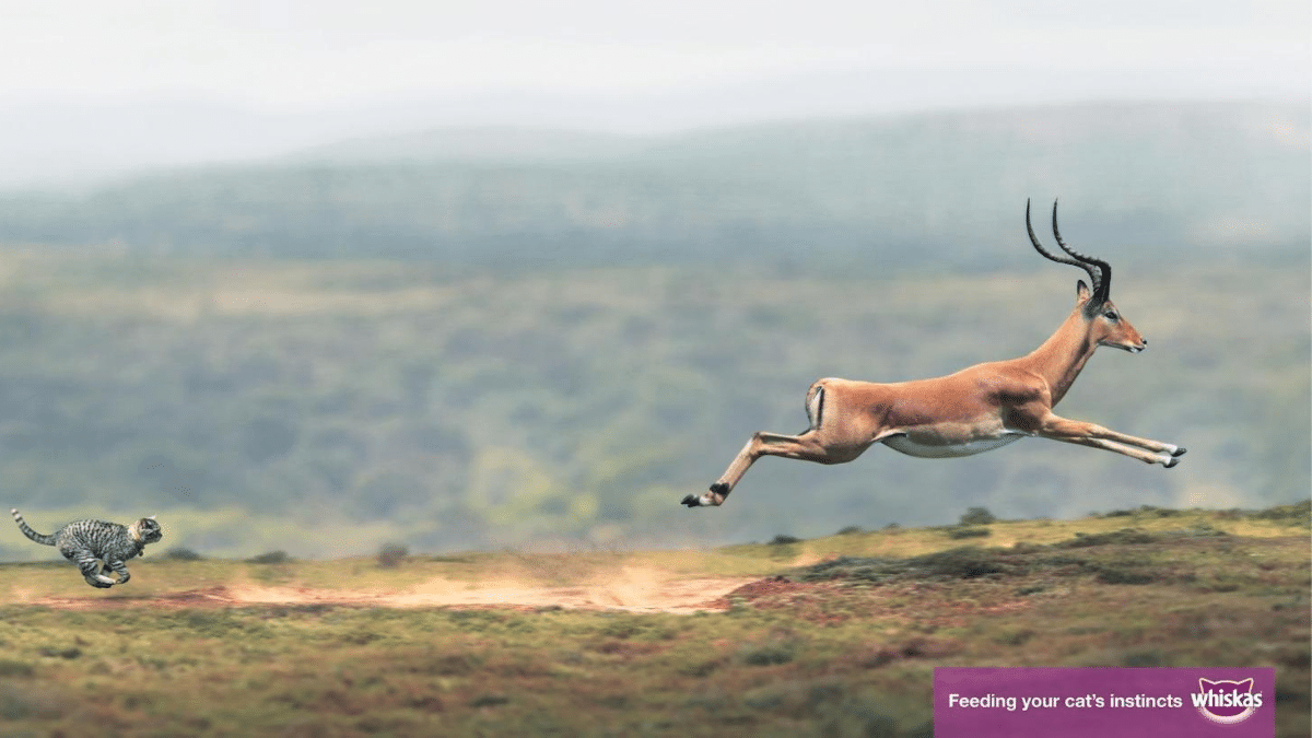Whiskas- Feeding your cat's instincts print advertisement with cat chasing deer in the bushveld